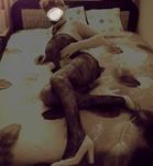 Mónika (49 éves, Nő) - Telefon: +36 70 / 294-1733 - Szombathely, szexpartner